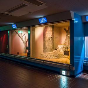 日本平動物園 夜行性動物館(昼照明)