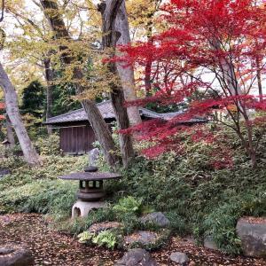茶室「林丘亭」(柏の宮公園)&冬桜など(東京・杉並区)