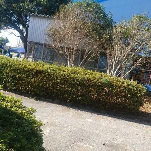中学地区ソフトテニス大会