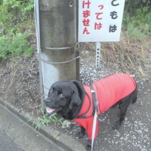 雨模様で蒸し暑かった土曜(12日)の散歩~♪
