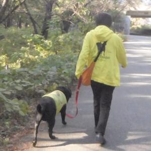 夏空の残暑に戻った金曜(18日)の夜散歩[ブロ友さんの旅立ち]!!