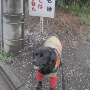 秋雨前線で肌寒くなった土曜(26日)の散歩~♪