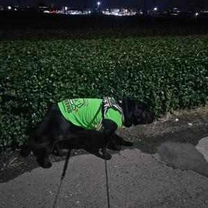 春の陽気で北風も吹いた水曜(27日)の夜散歩[5歳7ヶ月]〜♪