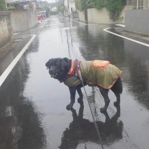 梅雨前線の停滞する木~金曜(1・2日)の朝&夜散歩~♪