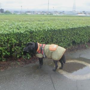 梅雨空の続いた土~日曜(3・4日)の朝&夜散歩~♪