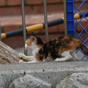 おまけ… 望遠レンズ(旧サンヨン)で野良猫を盗撮してみた! Nikon D750