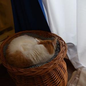 にゃんだと!? 猫の日にもほどがある… 2020年 令和2年 2月22日(特に意味はない)