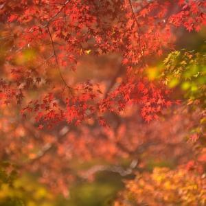 「紅葉始まる」 いわき 夏井川渓谷にて撮影!