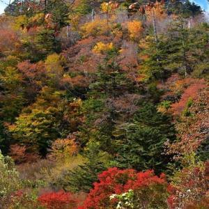「渓谷に秋の聲!」 いわき 夏井川渓谷にて撮影!