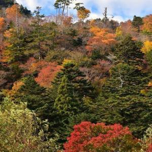 「渓谷の秋の聲2」 いわき 夏井川渓谷にて撮影!