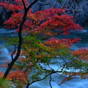 「渓流と紅葉!」 いわき 夏井川渓谷にて撮影!