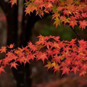 「しっとり美しく!」 いわき 夏井川渓谷にて撮影! 紅葉
