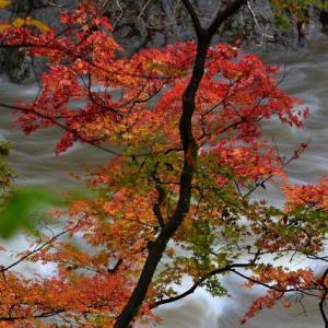 「季節は進む!」 いわき 夏井川渓谷にて撮影! 渓流と紅葉