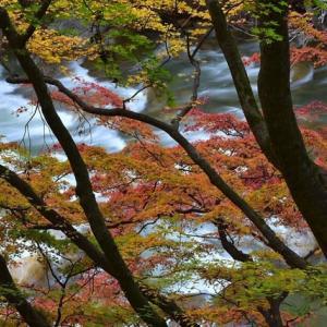 「秋の渓流!」 いわき 夏井川渓谷にて撮影!