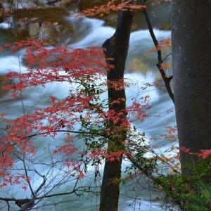 「残り紅葉と渓流!」 いわき 夏井川渓谷にて撮影!