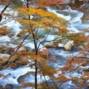 「晩秋の夏井川」 いわき 夏井川渓谷にて撮影! 秋彩と渓流