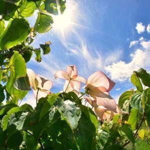 「初夏の陽を浴びて」 いわき 高野花見山にて撮影! 赤いヤマボウシ