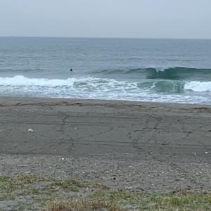 日常と変わらず早朝サーフィン皆さん元気