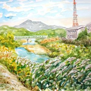 天白川のススキ