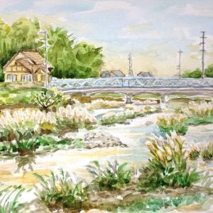 天白川のすすき2