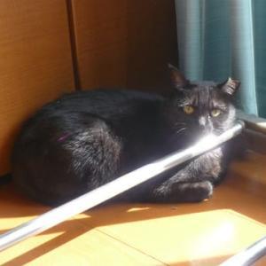 日光浴中の三猫♪