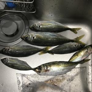 1月6日釣行。初めてまともにフロートを使ってみた