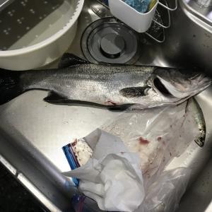 3月16日釣行想定外の事態で終了w