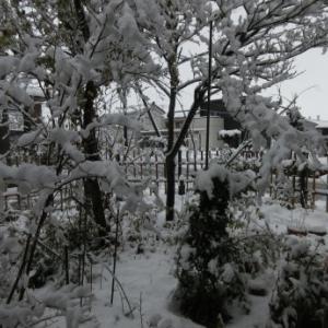 とうとう雪が降った