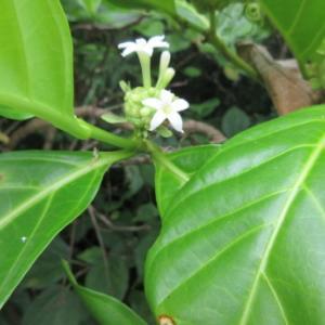 久高島の植物