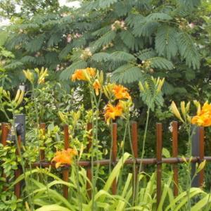 梅雨に咲く花