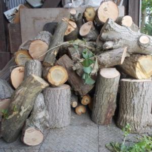 薪にする銀杏の木 など