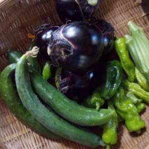 頂きもの野菜を食べきる