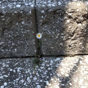 様々な僕の町に咲いた花…