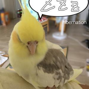 お昼寝圭さん。