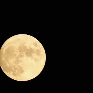 十五夜イブに息子たちと月を眺める