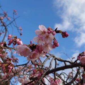 春を探しに。。