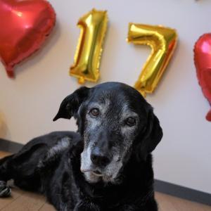ついに達成!17歳の誕生日。