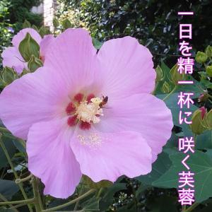 水野タケシのフォト575・ネリママさん作ー20200812(2037)