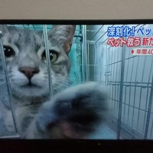 """改革すべきは""""身勝手な猫好き""""の意識。"""