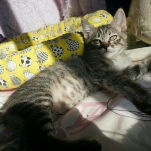 とっても重要な時期~社会期の子猫。