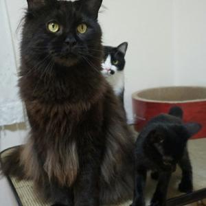 黒猫比べ( *´艸`)