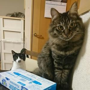 猫に肩書なんてない。