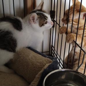 子猫はすぐに仲良しに。