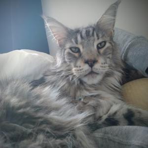 腕枕猫と爪とぎと。