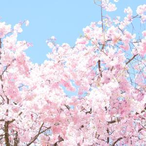 お花見~山梨の春~
