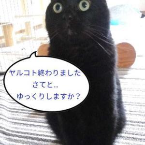 トムとのんびり(*´ω`*)