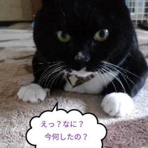 おばちゃんのイタズラ(´・ω・`)