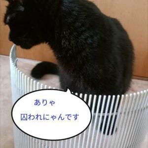 お掃除(ΦωΦ)(^(エ)^)