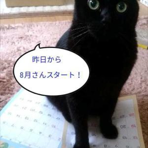 (ΦωΦp2020年8月さんq*´ω`*)