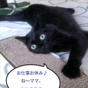 (*´ω`p10月6日トムの日qΦωΦ)